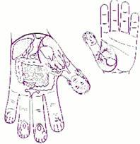 Su Jok: Im Mikrosystemen Su (Hand) kennt die koreanische Akupunktur viele wichtige Punkte.